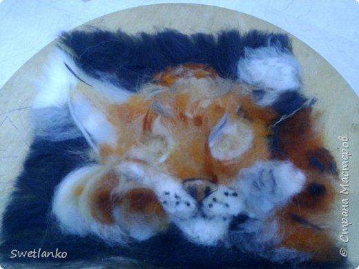 Знакомьтесь - рысь обыкновенная или европейская. Окраска меха очень разнообразна по цвету (от пепельно-голубой до красно-рыжей) и характеру пятнистости - от одноцветной до резко пятнистой, конец хвоста чёрный. От каракала отличается длинным мехом, коротким хвостом, более короткой головой, наличием на щеках баков. От других крупных кошек - коротким хвостом, от мелких кошек - размерами. Географическая изменчивость окраски и размеров очень велика, охотники и пушники выделяют несколько кряжей, описано много форм, из которых реальными признаются около 13 подвидов, на территории бывшего СССР обитают 8. фото 8