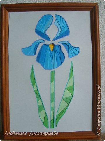 """Ирис - это многолетнее растение до 50-80 см высотой.  Корневище вверху с бурыми остатками листовых влагалищ.  Стебель вверху разветвленный с 2-3 стеблеобъемлющими листьями. Прикорневые листья линейные, длинные. Листочки обертки ланцетные, травянистые. Цветы по 2-3 на верхушках стеблей. Околоцветник темно-синий с короткой трубкой до 5 см длиной. Наружные доли отогнуты к низу, продолговато-обратнояйцевидные, голые, в средней части бледно-синие с темными сине-фиолетовыми жилками. Внутренние доли околоцветника уже. Коробочка продолговато-овальная, туповатая, около 2,5 см длины, без носика. Растет по сырым березовым колкам и их опушкам, по пойменным заболоченным и лесным лугам. Информация взята из Википедии и с сайта """"Сборник научных статей"""" """"Растения, занесенные в Красную книгу Алтайского края"""" Чертовских И.А. Науч. рук. Собчак Р.О фото 1"""