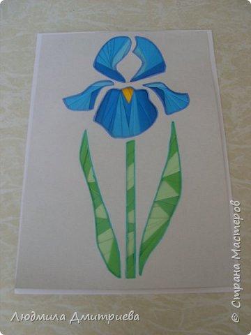 """Ирис - это многолетнее растение до 50-80 см высотой.  Корневище вверху с бурыми остатками листовых влагалищ.  Стебель вверху разветвленный с 2-3 стеблеобъемлющими листьями. Прикорневые листья линейные, длинные. Листочки обертки ланцетные, травянистые. Цветы по 2-3 на верхушках стеблей. Околоцветник темно-синий с короткой трубкой до 5 см длиной. Наружные доли отогнуты к низу, продолговато-обратнояйцевидные, голые, в средней части бледно-синие с темными сине-фиолетовыми жилками. Внутренние доли околоцветника уже. Коробочка продолговато-овальная, туповатая, около 2,5 см длины, без носика. Растет по сырым березовым колкам и их опушкам, по пойменным заболоченным и лесным лугам. Информация взята из Википедии и с сайта """"Сборник научных статей"""" """"Растения, занесенные в Красную книгу Алтайского края"""" Чертовских И.А. Науч. рук. Собчак Р.О фото 6"""