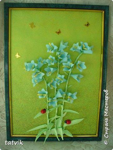 Колокольчик персиколистный (Campanula persicifolia L.) — один из красивейших цветков семейства колокольчиковых.  фото 1