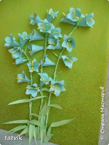 Колокольчик персиколистный (Campanula persicifolia L.) — один из красивейших цветков семейства колокольчиковых.  фото 2