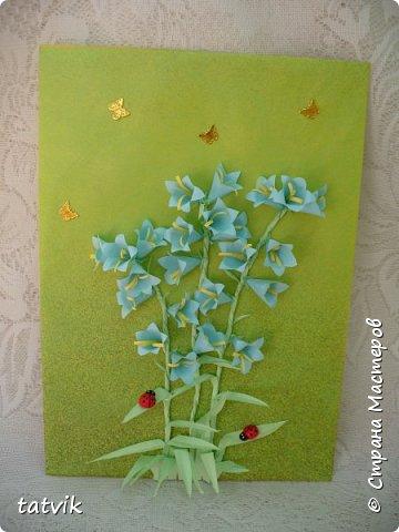 Колокольчик персиколистный (Campanula persicifolia L.) — один из красивейших цветков семейства колокольчиковых.  фото 18