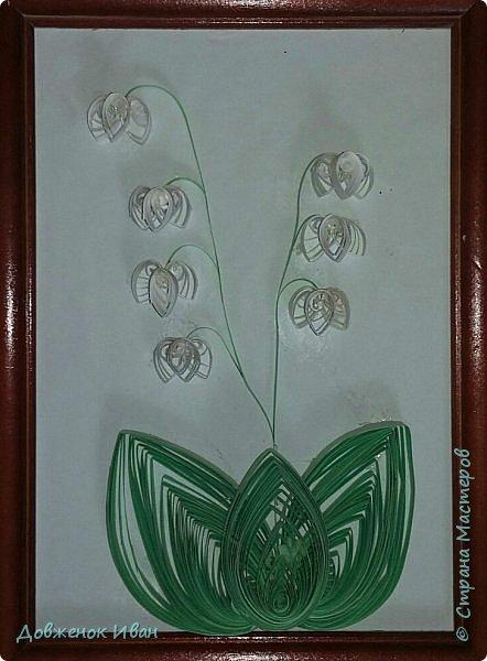 """Многолетнее травянистое растение высотой 15-20 см. От корневища отходят 2, реже 1-3 листа длиной около 20 см и тонкая цветочная стрелка, почти равная по длине листьям, окруженная у основания пленчатыми листочками. Сверху цветочной стрелки однобокой повислой кистью собраны приятно пахнущие белые цветки (5-20 штук), похожие на маленькие шарообразные колокольчики. Плод - красная ягода. Все растение ядовито. Цветет в апреле - июне, плодоносит в августе - сентябре. Ландыш известен с древности как ценное лекарственное растение.  Научное название майского ландыша происходит от греческих слов """"конваллис"""" - долина, """"лирион"""" - лилия и """"майялис"""" - майская, т. е. """"лилия долин, цветущая в мае"""".  Ландыш - любимый цветок многих народов, особенно французов, где в первое, майское воскресенье отмечают праздник ландышей.  Об этом растении сложены легенды. Одна из них рассказывает, как Ландыш влюбился в Весну, а когда она ушла, он горько плакал, и кровь выступила у него из сердца, и окрасила слезы - красные плоды, которые, появляются на стебле после цветения. (http://www.zooclub.ru/flora/lilii/11.shtml)  фото 1"""