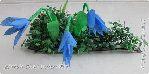 Пролеска - голубые подснежники ранней весной поднимут настроение даже в самую плохую погоду, ведь они означают приход весны. фото 1