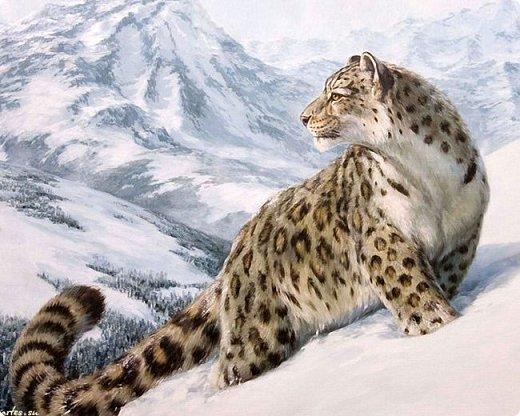 Для участия в конкурсе решила изобразить снежного барса. На конкурс представлено уже несколько портретов этих прекрасных диких кошек, вот мой вариант. фото 2