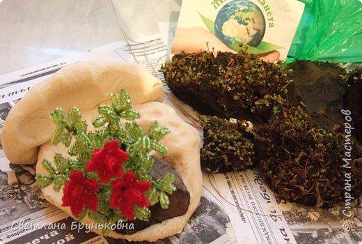 Маленькая роза. Название «Родиола» - уменьшительное от греческих слов rhodia или rhodon - роза, розовый, дословно - «маленькая роза»; из-за запаха надрезанных корней, сходного с ароматом розы. фото 6