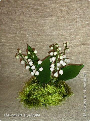 Ландыш – необыкновенно красивое растение. Ценится прежде всего за красоту мелких колокольчатых цветков, собранных в поникающее кистевидное соцветие и обладающих сильным ароматом. Окраска лепестков ландыша зависит от сорта, однако чаще всего лепестки белые. Не менее красивые гладкие листья ландыша имеют широкоэллиптическую форму и окрашены в темно-зеленый цвет ( источник : энциклопедия растенийhttp://www.pro-landshaft.ru/plants/detail/1074/) фото 1