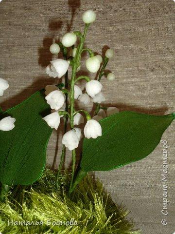 Ландыш – необыкновенно красивое растение. Ценится прежде всего за красоту мелких колокольчатых цветков, собранных в поникающее кистевидное соцветие и обладающих сильным ароматом. Окраска лепестков ландыша зависит от сорта, однако чаще всего лепестки белые. Не менее красивые гладкие листья ландыша имеют широкоэллиптическую форму и окрашены в темно-зеленый цвет ( источник : энциклопедия растенийhttp://www.pro-landshaft.ru/plants/detail/1074/) фото 2