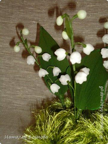 Ландыш – необыкновенно красивое растение. Ценится прежде всего за красоту мелких колокольчатых цветков, собранных в поникающее кистевидное соцветие и обладающих сильным ароматом. Окраска лепестков ландыша зависит от сорта, однако чаще всего лепестки белые. Не менее красивые гладкие листья ландыша имеют широкоэллиптическую форму и окрашены в темно-зеленый цвет ( источник : энциклопедия растенийhttp://www.pro-landshaft.ru/plants/detail/1074/) фото 3