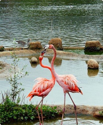 Фламинго очень изящная и необычная птица. Недаром, она привлекла внимание многих конкурсантов. Вот и Полина не устояла перед грациозностью этой птицы. Длинные ноги, гибкая шея и особый, изогнутый вниз клюв делают фламинго эталоном птичьей красоты.  Представляем вашему вниманию панно в технике кинусайга. Девочки мои впали в гигантизм, их работы становятся все больше и больше. Конечно, и времени затрачено немало, но оно того стоит. фото 2