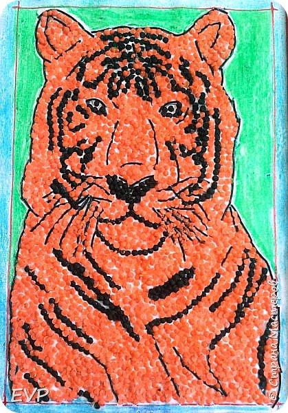 Амурский тигр - редкий подвид, сохранившийся лишь на территории России. Мы решили сделать тигра из крупы, использовали чечевицу красную, покрасила её для полосок в чёрный цвет акриловыми красками, макароны паутинка также покрашены в чёрный цвет. фото 7