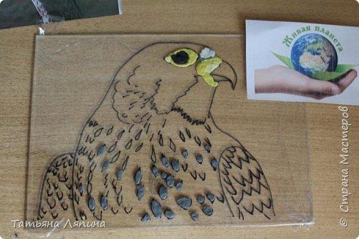 Здравствуйте! Представляю работу моего сына. Она выполнена в технике- обратная аппликация из пластилина. Сын очень любит лепить. Предложила ему выполнить картину в этой технике. Долго выбирали что изобразить на картине. Сына привлекла птица сапсан. фото 4