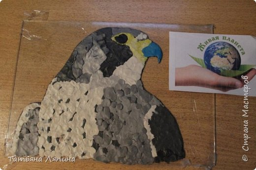 Здравствуйте! Представляю работу моего сына. Она выполнена в технике- обратная аппликация из пластилина. Сын очень любит лепить. Предложила ему выполнить картину в этой технике. Долго выбирали что изобразить на картине. Сына привлекла птица сапсан. фото 5
