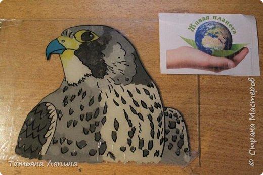 Здравствуйте! Представляю работу моего сына. Она выполнена в технике- обратная аппликация из пластилина. Сын очень любит лепить. Предложила ему выполнить картину в этой технике. Долго выбирали что изобразить на картине. Сына привлекла птица сапсан. фото 6
