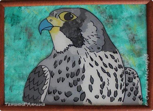 Здравствуйте! Представляю работу моего сына. Она выполнена в технике- обратная аппликация из пластилина. Сын очень любит лепить. Предложила ему выполнить картину в этой технике. Долго выбирали что изобразить на картине. Сына привлекла птица сапсан. фото 7