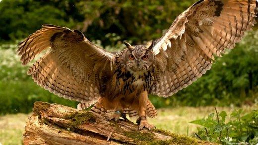В народе филин считается самой умной птицей. Это символ мудрости, олицетворение знаний, человеческого опыта ,означающий то, что люди не должны ничего предпринимать опрометчиво, а прежде   чем что-то делать, должны хорошо и спокойно подумать.   Поэтому творческие люди часто используют образ мудрой птицы в своих работах. Новый конкурс подстегнул и заставил задуматься..... Вот такой филин появился у меня в результате творческих исканий....  Вот такой филин появился у меня  фото 8