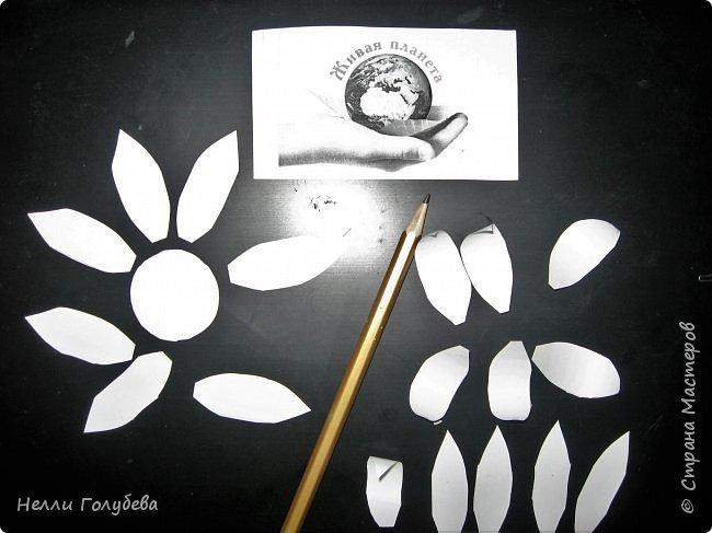 Белая кувшинка - королева водоемов фото 4