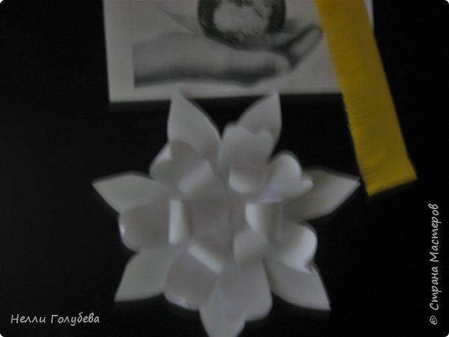 Белая кувшинка - королева водоемов фото 5