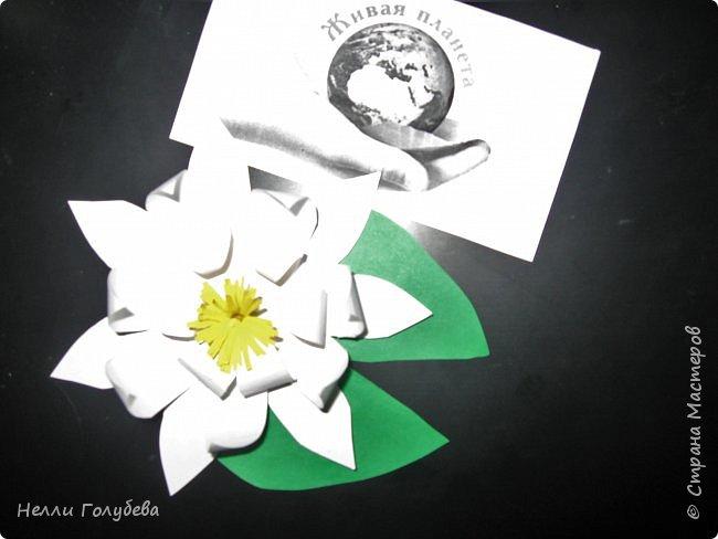 Белая кувшинка - королева водоемов фото 6