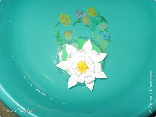 Белая кувшинка - королева водоемов фото 7
