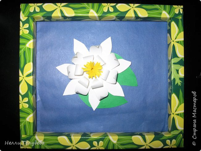 Белая кувшинка - королева водоемов фото 8