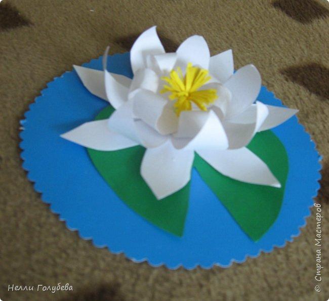 Белая кувшинка - королева водоемов фото 1