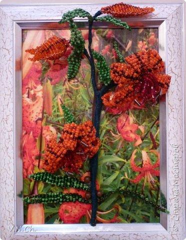 Ланцетолистная (тигровая) лилия Среди множества видов лилий есть тигровые лилии.   Лилия тигровая – травянистое многолетнее растение, достигающее высоты 1,5 метров. Имеет ползучее корневище с небольшими белыми яйцевидными луковицами. Стебель прямостоячий, бурого цвета, цилиндрический, с бело-войлочным опушением. Листья ланцетовидные, с черными мелкими шаровидными луковицами в ложах у стебля. Цветки крупные, чалмовидные, до 9 см в диаметре, оранжевые с темно-фиолетовыми пятнышками. Плод – коробочка.Тычинки имеют ярко красные пыльники.                                                                                                                                                                                                                                                                                                                                                                    фото 1