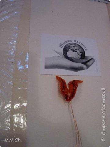 Ланцетолистная (тигровая) лилия Среди множества видов лилий есть тигровые лилии.   Лилия тигровая – травянистое многолетнее растение, достигающее высоты 1,5 метров. Имеет ползучее корневище с небольшими белыми яйцевидными луковицами. Стебель прямостоячий, бурого цвета, цилиндрический, с бело-войлочным опушением. Листья ланцетовидные, с черными мелкими шаровидными луковицами в ложах у стебля. Цветки крупные, чалмовидные, до 9 см в диаметре, оранжевые с темно-фиолетовыми пятнышками. Плод – коробочка.Тычинки имеют ярко красные пыльники.                                                                                                                                                                                                                                                                                                                                                                    фото 7