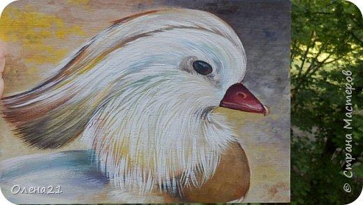 Здравствуйте, жители Страны Мастеров!  Меня зовут мандаринка. Я лесная утка, семейства утиных. Живу на территории Дальнего Востока. Зимую в Китае или Японии. фото 8