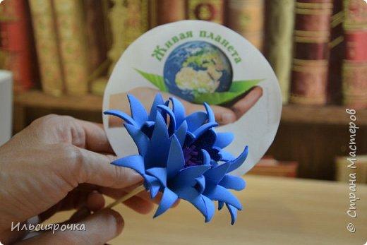 Василёк – травянистое растение семейства сложноцветных. Существует свыше 500 видов, в России произрастает около 180 видов. 7 видов василька находятся в Красной книге России (один из них василёк Талиева с жёлтыми цветками). На Ямале встречается один из видов - василёк синий. фото 4