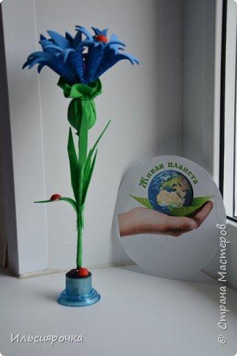 Василёк – травянистое растение семейства сложноцветных. Существует свыше 500 видов, в России произрастает около 180 видов. 7 видов василька находятся в Красной книге России (один из них василёк Талиева с жёлтыми цветками). На Ямале встречается один из видов - василёк синий. фото 6