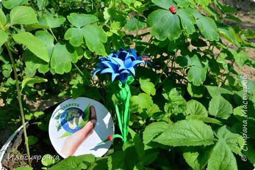 Василёк – травянистое растение семейства сложноцветных. Существует свыше 500 видов, в России произрастает около 180 видов. 7 видов василька находятся в Красной книге России (один из них василёк Талиева с жёлтыми цветками). На Ямале встречается один из видов - василёк синий. фото 7