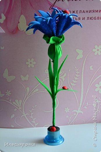 Василёк – травянистое растение семейства сложноцветных. Существует свыше 500 видов, в России произрастает около 180 видов. 7 видов василька находятся в Красной книге России (один из них василёк Талиева с жёлтыми цветками). На Ямале встречается один из видов - василёк синий. фото 1