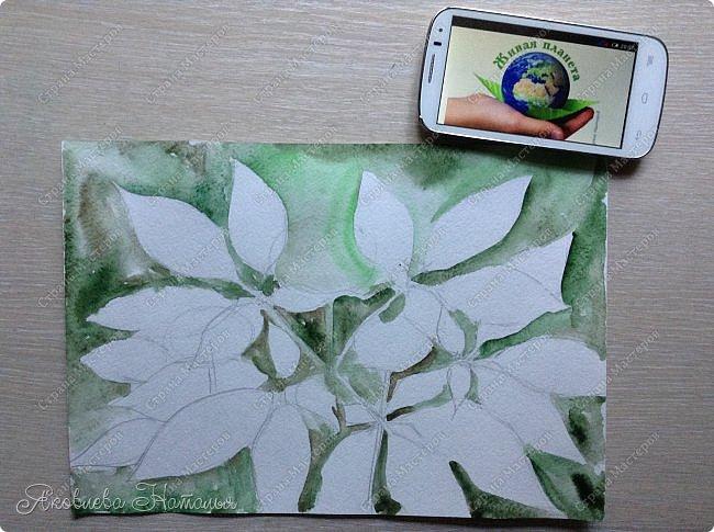 """Когда Ксюша узнала о конкурсе, сразу сказала про женьшень, о котором им рассказывали в школе. Женьшень - травянистое растение с крупным стержневым корнем. Листья небольшие, овальной формы. Высота взрослого растения – 60-80 см. Растет женьшень очень медленно. Цветет в июле, образуя один цветонос, на котором многочисленные зеленовато-белые цветки сформированы в соцветия – зонтики. Небольшие ярко-красные, чуть приплюснутые плоды созревают к концу лета. В природе женьшень растет около 100 лет. Размножается семенами. Женьшень – одно из самых древних лекарственных растений. Уже три тысячи лет назад народные целители использовали его в медицинских целях. Систематическое описание лечебных свойств женьшеня было предпринято в Китае во времена правления императора Шень-нуна. За огромную пользу этого чудодейственного растения китайский император назвал женьшень """"королевской травой"""". В Европу корни женьшеня впервые были завезены в XVIII в. из Азии. В России с ними познакомились чуть раньше – в конце XVII в. фото 4"""