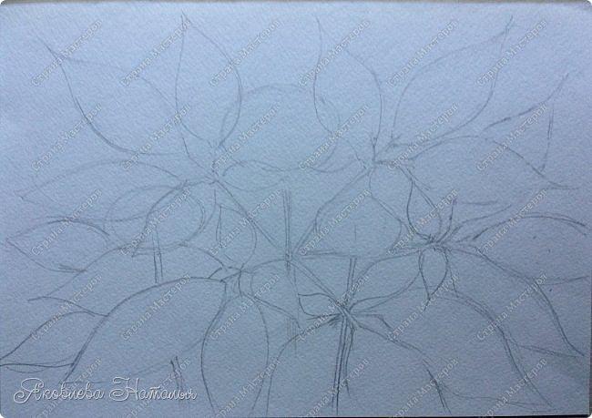 """Когда Ксюша узнала о конкурсе, сразу сказала про женьшень, о котором им рассказывали в школе. Женьшень - травянистое растение с крупным стержневым корнем. Листья небольшие, овальной формы. Высота взрослого растения – 60-80 см. Растет женьшень очень медленно. Цветет в июле, образуя один цветонос, на котором многочисленные зеленовато-белые цветки сформированы в соцветия – зонтики. Небольшие ярко-красные, чуть приплюснутые плоды созревают к концу лета. В природе женьшень растет около 100 лет. Размножается семенами. Женьшень – одно из самых древних лекарственных растений. Уже три тысячи лет назад народные целители использовали его в медицинских целях. Систематическое описание лечебных свойств женьшеня было предпринято в Китае во времена правления императора Шень-нуна. За огромную пользу этого чудодейственного растения китайский император назвал женьшень """"королевской травой"""". В Европу корни женьшеня впервые были завезены в XVIII в. из Азии. В России с ними познакомились чуть раньше – в конце XVII в. фото 3"""