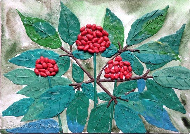 """Когда Ксюша узнала о конкурсе, сразу сказала про женьшень, о котором им рассказывали в школе. Женьшень - травянистое растение с крупным стержневым корнем. Листья небольшие, овальной формы. Высота взрослого растения – 60-80 см. Растет женьшень очень медленно. Цветет в июле, образуя один цветонос, на котором многочисленные зеленовато-белые цветки сформированы в соцветия – зонтики. Небольшие ярко-красные, чуть приплюснутые плоды созревают к концу лета. В природе женьшень растет около 100 лет. Размножается семенами. Женьшень – одно из самых древних лекарственных растений. Уже три тысячи лет назад народные целители использовали его в медицинских целях. Систематическое описание лечебных свойств женьшеня было предпринято в Китае во времена правления императора Шень-нуна. За огромную пользу этого чудодейственного растения китайский император назвал женьшень """"королевской травой"""". В Европу корни женьшеня впервые были завезены в XVIII в. из Азии. В России с ними познакомились чуть раньше – в конце XVII в. фото 8"""