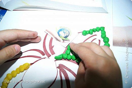 Венерин башмачок настоящий. фото 4