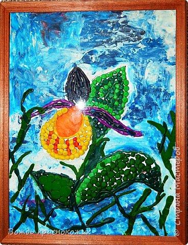 Венерин башмачок настоящий. фото 1