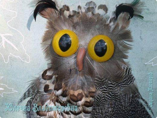 В небе кружит ночью длинной Самый крупный, самый сильный Из большой семьи совиной Крючконосый хищный…        (Филин) А. Измайлов  фото 3