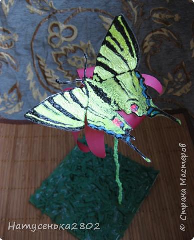 Бабочка Подалирий фото 1