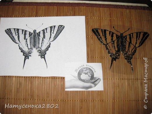 Бабочка Подалирий фото 5