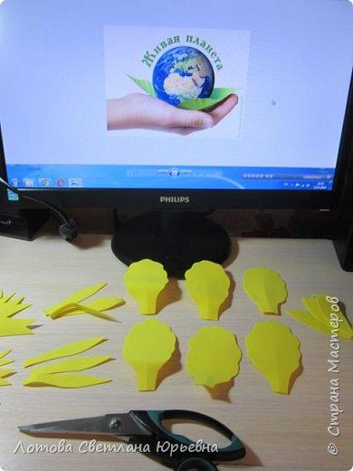 Касатики - однодольные травянистые многолетники из семейства ирисовых, достигают иногда 70-90 сантиметров высоты. Растение развивает мощные горизонтальные или косо-растущие мясистые корневища с многочисленными придаточными корнями с нижней стороны. Стебли прямостоячие, ветвистые, однолетние. Прикорневые листья, напоминающие меч, содержат значительное количество аскорбиновой кислоты. Касатики украшают берега наших рек. Особенно хороши ирисы желтые. Днем под лучами солнца они пламенно-желтые, а когда луна осыпает их серебром, они кажутся маленькими маяками, указывающими путь рыбакам. фото 3