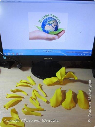 Касатики - однодольные травянистые многолетники из семейства ирисовых, достигают иногда 70-90 сантиметров высоты. Растение развивает мощные горизонтальные или косо-растущие мясистые корневища с многочисленными придаточными корнями с нижней стороны. Стебли прямостоячие, ветвистые, однолетние. Прикорневые листья, напоминающие меч, содержат значительное количество аскорбиновой кислоты. Касатики украшают берега наших рек. Особенно хороши ирисы желтые. Днем под лучами солнца они пламенно-желтые, а когда луна осыпает их серебром, они кажутся маленькими маяками, указывающими путь рыбакам. фото 4