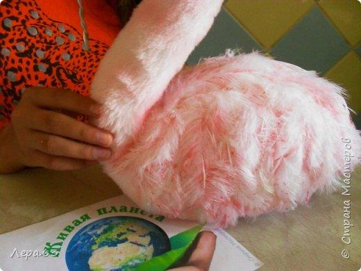 Внешний вид фламинго — статной птицы, принадлежащей к семейству фламинговых, замечателен. Гибкая, почти лебединая шея, длинные ноги, мягкие пёрышки, а главное, окрас: белый, нежно-розовый, красный, плюс вариации этих цветов.  Хвост у фламинго короткий, а вот клюв – массивный, выгнутый вниз. Голова – небольшая, на ней есть неоперенные участки – кольцо вокруг глаз и подбородок.  В течение светового дня фламинго отыскивает пищу. Важно передвигаясь на своих длинных, как ходули, ногах, наклонив туловище, на мелководье их внимание привлекают сине-зеленые водоросли, мелкие ракообразные, личинки насекомых.  Клюв фламинго нередко называют «цедилкой». Ухватив добычу, птицы размахивают головой, отделяя пищу от воды.  Всем известна красивая песня под названием «Розовый фламинго». А почему фламинго розовый, или красноватый? Такую окраску оперению этой птице придают красящие вещества липохромы, которые фламингообразные получают вместе с пищей.  Перекусив, птицы бредут в обратном направлении. В середине дня взрослые фламинго занимаются гигиеническими процедурами – чистят клювом свои перья.  Живут фламинго в башенках. Башенки – это узкие гнёзда, в них птицы откладывают яйца. Чтобы поместиться в гнезде, фламинго поджимают под себя свои длинные ноги.  Поза при отдыхе у фламинго своеобразна. Как правило, птица стоит на одной ноге, закинув голову на спину. У природы свои причуды. фото 14