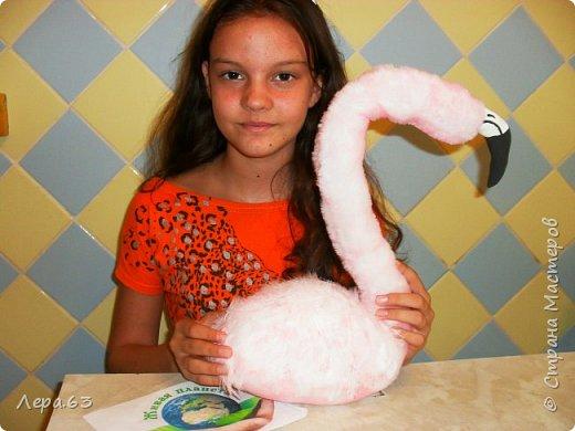 Внешний вид фламинго — статной птицы, принадлежащей к семейству фламинговых, замечателен. Гибкая, почти лебединая шея, длинные ноги, мягкие пёрышки, а главное, окрас: белый, нежно-розовый, красный, плюс вариации этих цветов.  Хвост у фламинго короткий, а вот клюв – массивный, выгнутый вниз. Голова – небольшая, на ней есть неоперенные участки – кольцо вокруг глаз и подбородок.  В течение светового дня фламинго отыскивает пищу. Важно передвигаясь на своих длинных, как ходули, ногах, наклонив туловище, на мелководье их внимание привлекают сине-зеленые водоросли, мелкие ракообразные, личинки насекомых.  Клюв фламинго нередко называют «цедилкой». Ухватив добычу, птицы размахивают головой, отделяя пищу от воды.  Всем известна красивая песня под названием «Розовый фламинго». А почему фламинго розовый, или красноватый? Такую окраску оперению этой птице придают красящие вещества липохромы, которые фламингообразные получают вместе с пищей.  Перекусив, птицы бредут в обратном направлении. В середине дня взрослые фламинго занимаются гигиеническими процедурами – чистят клювом свои перья.  Живут фламинго в башенках. Башенки – это узкие гнёзда, в них птицы откладывают яйца. Чтобы поместиться в гнезде, фламинго поджимают под себя свои длинные ноги.  Поза при отдыхе у фламинго своеобразна. Как правило, птица стоит на одной ноге, закинув голову на спину. У природы свои причуды. фото 16