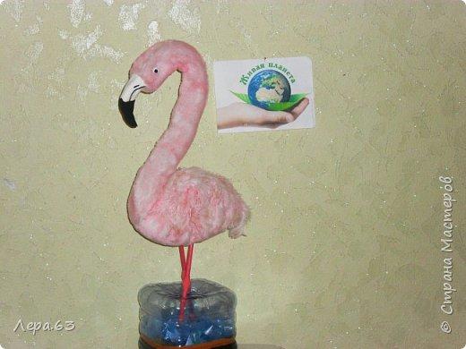 Внешний вид фламинго — статной птицы, принадлежащей к семейству фламинговых, замечателен. Гибкая, почти лебединая шея, длинные ноги, мягкие пёрышки, а главное, окрас: белый, нежно-розовый, красный, плюс вариации этих цветов.  Хвост у фламинго короткий, а вот клюв – массивный, выгнутый вниз. Голова – небольшая, на ней есть неоперенные участки – кольцо вокруг глаз и подбородок.  В течение светового дня фламинго отыскивает пищу. Важно передвигаясь на своих длинных, как ходули, ногах, наклонив туловище, на мелководье их внимание привлекают сине-зеленые водоросли, мелкие ракообразные, личинки насекомых.  Клюв фламинго нередко называют «цедилкой». Ухватив добычу, птицы размахивают головой, отделяя пищу от воды.  Всем известна красивая песня под названием «Розовый фламинго». А почему фламинго розовый, или красноватый? Такую окраску оперению этой птице придают красящие вещества липохромы, которые фламингообразные получают вместе с пищей.  Перекусив, птицы бредут в обратном направлении. В середине дня взрослые фламинго занимаются гигиеническими процедурами – чистят клювом свои перья.  Живут фламинго в башенках. Башенки – это узкие гнёзда, в них птицы откладывают яйца. Чтобы поместиться в гнезде, фламинго поджимают под себя свои длинные ноги.  Поза при отдыхе у фламинго своеобразна. Как правило, птица стоит на одной ноге, закинув голову на спину. У природы свои причуды. фото 17
