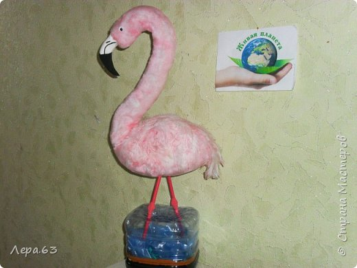 Внешний вид фламинго — статной птицы, принадлежащей к семейству фламинговых, замечателен. Гибкая, почти лебединая шея, длинные ноги, мягкие пёрышки, а главное, окрас: белый, нежно-розовый, красный, плюс вариации этих цветов.  Хвост у фламинго короткий, а вот клюв – массивный, выгнутый вниз. Голова – небольшая, на ней есть неоперенные участки – кольцо вокруг глаз и подбородок.  В течение светового дня фламинго отыскивает пищу. Важно передвигаясь на своих длинных, как ходули, ногах, наклонив туловище, на мелководье их внимание привлекают сине-зеленые водоросли, мелкие ракообразные, личинки насекомых.  Клюв фламинго нередко называют «цедилкой». Ухватив добычу, птицы размахивают головой, отделяя пищу от воды.  Всем известна красивая песня под названием «Розовый фламинго». А почему фламинго розовый, или красноватый? Такую окраску оперению этой птице придают красящие вещества липохромы, которые фламингообразные получают вместе с пищей.  Перекусив, птицы бредут в обратном направлении. В середине дня взрослые фламинго занимаются гигиеническими процедурами – чистят клювом свои перья.  Живут фламинго в башенках. Башенки – это узкие гнёзда, в них птицы откладывают яйца. Чтобы поместиться в гнезде, фламинго поджимают под себя свои длинные ноги.  Поза при отдыхе у фламинго своеобразна. Как правило, птица стоит на одной ноге, закинув голову на спину. У природы свои причуды. фото 3