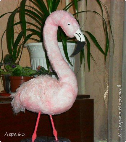 Внешний вид фламинго — статной птицы, принадлежащей к семейству фламинговых, замечателен. Гибкая, почти лебединая шея, длинные ноги, мягкие пёрышки, а главное, окрас: белый, нежно-розовый, красный, плюс вариации этих цветов.  Хвост у фламинго короткий, а вот клюв – массивный, выгнутый вниз. Голова – небольшая, на ней есть неоперенные участки – кольцо вокруг глаз и подбородок.  В течение светового дня фламинго отыскивает пищу. Важно передвигаясь на своих длинных, как ходули, ногах, наклонив туловище, на мелководье их внимание привлекают сине-зеленые водоросли, мелкие ракообразные, личинки насекомых.  Клюв фламинго нередко называют «цедилкой». Ухватив добычу, птицы размахивают головой, отделяя пищу от воды.  Всем известна красивая песня под названием «Розовый фламинго». А почему фламинго розовый, или красноватый? Такую окраску оперению этой птице придают красящие вещества липохромы, которые фламингообразные получают вместе с пищей.  Перекусив, птицы бредут в обратном направлении. В середине дня взрослые фламинго занимаются гигиеническими процедурами – чистят клювом свои перья.  Живут фламинго в башенках. Башенки – это узкие гнёзда, в них птицы откладывают яйца. Чтобы поместиться в гнезде, фламинго поджимают под себя свои длинные ноги.  Поза при отдыхе у фламинго своеобразна. Как правило, птица стоит на одной ноге, закинув голову на спину. У природы свои причуды. фото 18