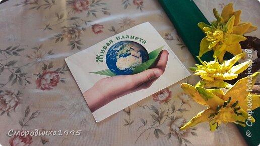 Весенний адонис Светит адонис,как солнышко ясное, Утро весеннее, очень прекрасное. Шарфом махровым пушатся листочки, И янтарём заблестят лепесточки.                                         ( Наталья Лышко) Адонис весенний (Горицвет) – растение, занесенное в Красную книгу Краснодарского края. Имеет ярко-желтую окраску. Его плоды добавляю в различные лекарственные препараты. Помогает справиться с сердечными недугами, неврологическими проблемами и болезнями почек.Свое необычное название растение получило из мифологии Древней Греции. Адонис – имя возлюбленного Афродиты, богини любви. Этот цветок олицетворял чувство богини к мужчине. Растение имеет ярко-желтый цвет и появляется при первых лучах весеннего солнца. Средняя высота достигает 50 сантиметров. Адонис принадлежит семейству Лютиковых. В народе его часто называют Горицветом за яркую окраску. Использование растения Адонис занесен в Красную книгу Краснодарского края, тем не менее, он активно используется в лекарственных целях. Собирая горицвет, необходимо знать основные правила. Срывать цветки можно не чаще одного раза в пять лет, при этом, не повреждая основную часть растения. Целебные свойства адониса были известны много лет назад. Из него готовят фармацевтические препараты, которые помогают справиться с сердечными недомоганиями, болезнями почек. Настои устраняют судороги, успокаивают нервы. Несмотря на все полезные свойства, горицвет является ядовитым растением.  Ресурс:http://5geografiya.net/Severnyj-Kavkaz/Krasnaja-kniga-Stavropolskogo-kraja/008-Adonis-vesennij.html  фото 7