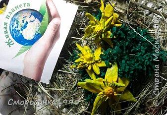 Весенний адонис Светит адонис,как солнышко ясное, Утро весеннее, очень прекрасное. Шарфом махровым пушатся листочки, И янтарём заблестят лепесточки.                                         ( Наталья Лышко) Адонис весенний (Горицвет) – растение, занесенное в Красную книгу Краснодарского края. Имеет ярко-желтую окраску. Его плоды добавляю в различные лекарственные препараты. Помогает справиться с сердечными недугами, неврологическими проблемами и болезнями почек.Свое необычное название растение получило из мифологии Древней Греции. Адонис – имя возлюбленного Афродиты, богини любви. Этот цветок олицетворял чувство богини к мужчине. Растение имеет ярко-желтый цвет и появляется при первых лучах весеннего солнца. Средняя высота достигает 50 сантиметров. Адонис принадлежит семейству Лютиковых. В народе его часто называют Горицветом за яркую окраску. Использование растения Адонис занесен в Красную книгу Краснодарского края, тем не менее, он активно используется в лекарственных целях. Собирая горицвет, необходимо знать основные правила. Срывать цветки можно не чаще одного раза в пять лет, при этом, не повреждая основную часть растения. Целебные свойства адониса были известны много лет назад. Из него готовят фармацевтические препараты, которые помогают справиться с сердечными недомоганиями, болезнями почек. Настои устраняют судороги, успокаивают нервы. Несмотря на все полезные свойства, горицвет является ядовитым растением.  Ресурс:http://5geografiya.net/Severnyj-Kavkaz/Krasnaja-kniga-Stavropolskogo-kraja/008-Adonis-vesennij.html  фото 1